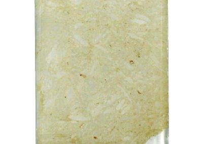 sezione sottile di calcare marnoso fossilifero